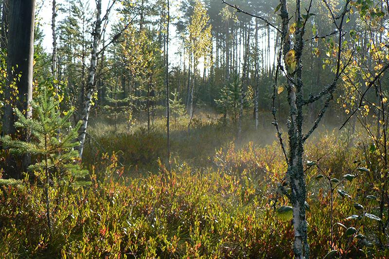 туманное болото_