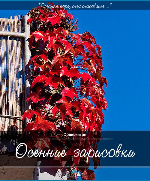 Осенью, года 2011