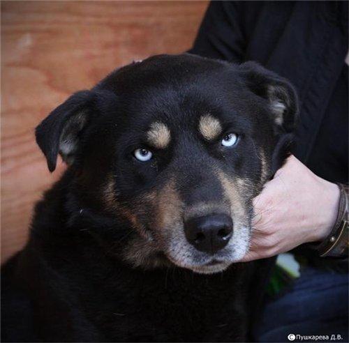 Необычные собаки - миксы пород и редкие окрасы 0_6e5c7_a3a5b4cf_L