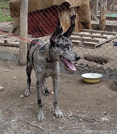 Необычные собаки - миксы пород и редкие окрасы 0_6e5d3_a4418bbb_L