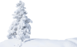 snow trees.png