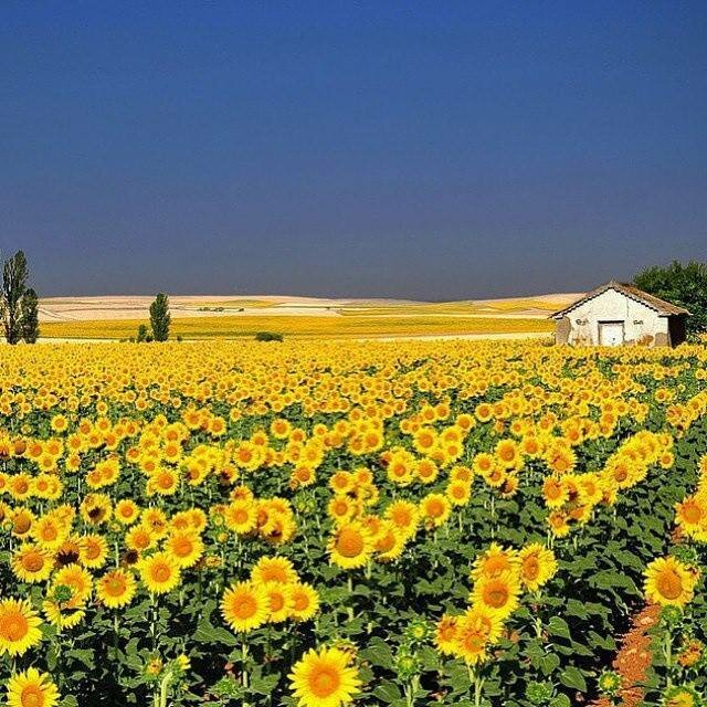 тогда а на україні розквітають сади бытовая