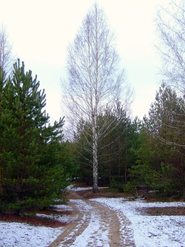 Дорога в заснеженном лесу