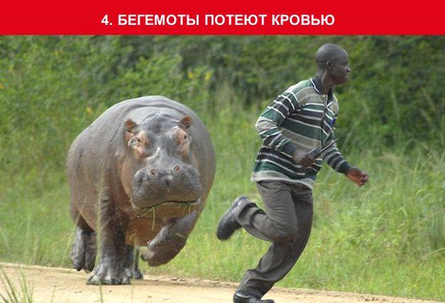 http://img-fotki.yandex.ru/get/4426/130422193.96/0_703d9_7c0e7ab2_orig
