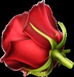 роза50.png
