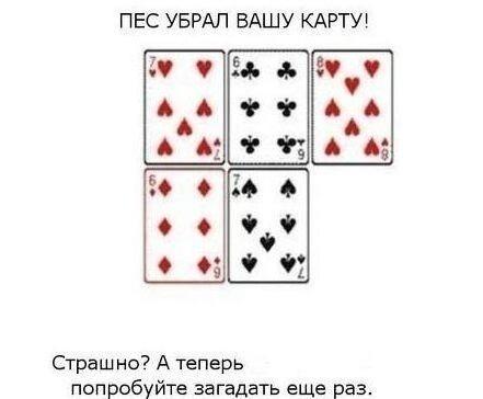 играть карты пес