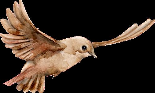 CreatewingsDesigns_FF_Bird9.png