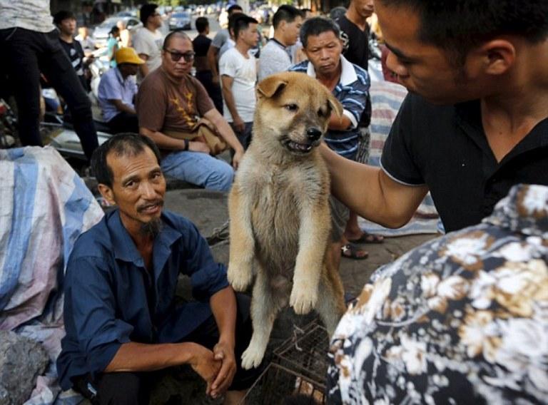 Китайцы едят собак  cтатьи похожие на едят ли в китае