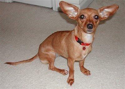 Необычные собаки - миксы пород и редкие окрасы 0_6e5d0_9b206a22_L