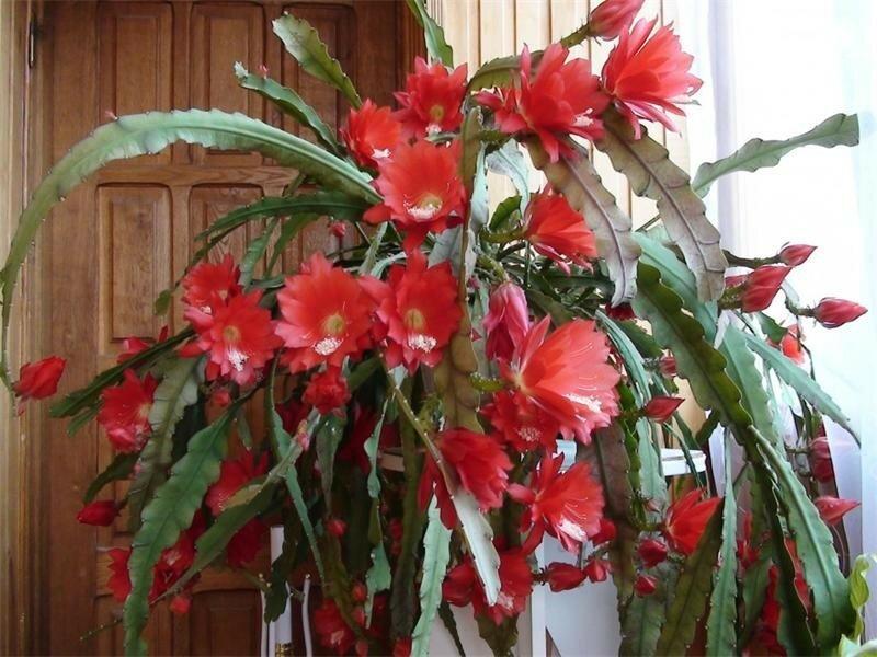 Visyachie-sukkulenty--vidy-visyachih-kaktusov.jpg