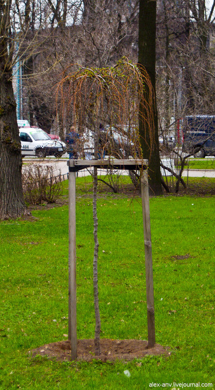 Петропавловская крепость. Деревья ещё только распускают листья.