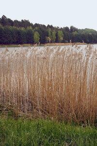 """Водно-болотная растительность заповедника """"Расточье"""""""