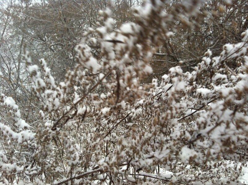Снегопад. Посёлок АМЗ