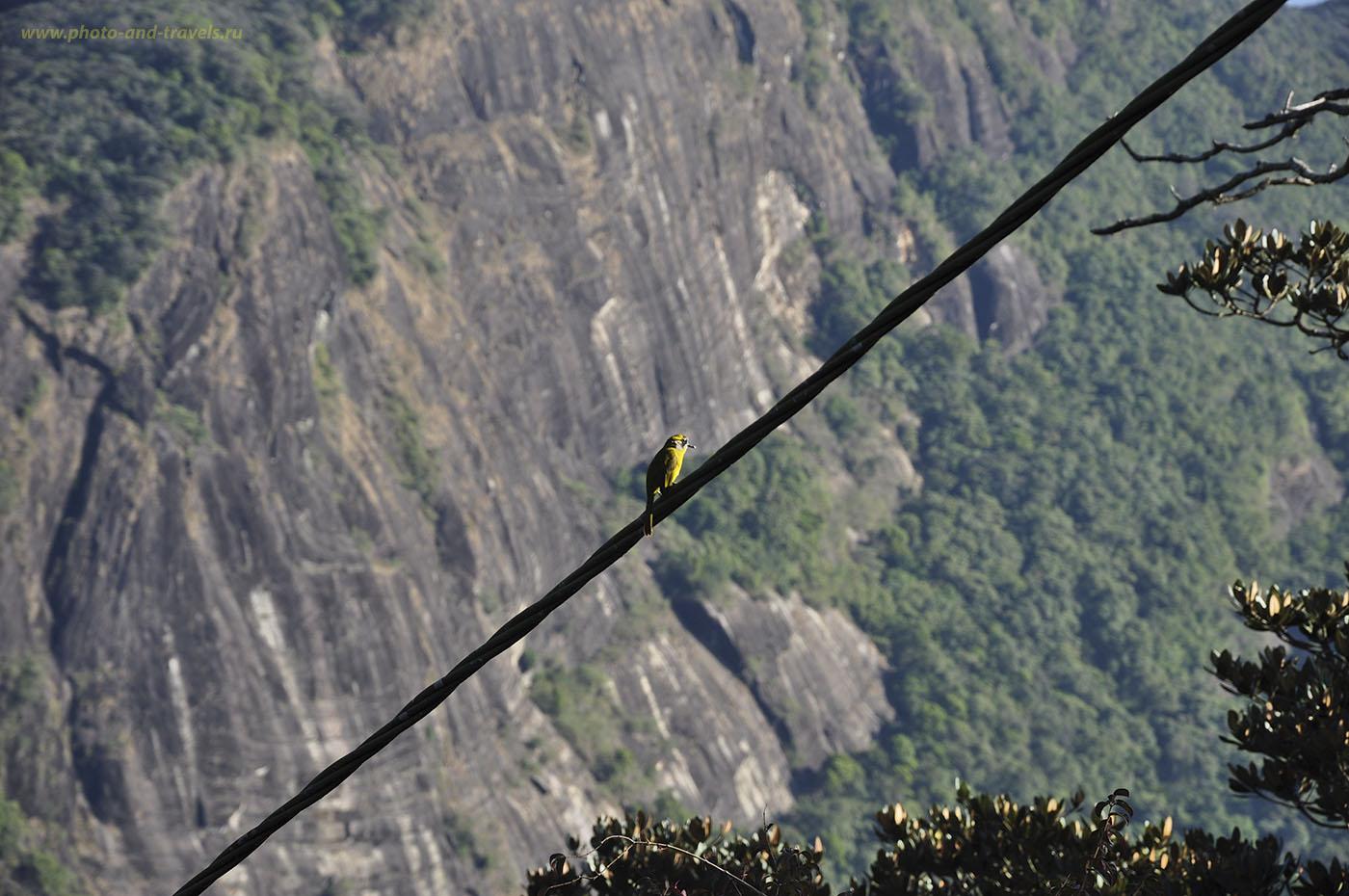 Фотография №8. Восхождение на Пик Адама начинается с прохождения глубочайшего ущелья, с отвесных стен которого, как в Затерянном Мире, сбрасываются водопады. Не будет сил смотреть по сторонам, наблюдайте на привале за птицами.