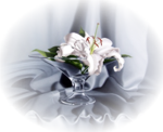 fleur_rose_passion_03.png