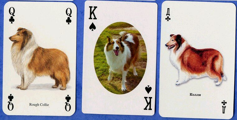 Rough collies playing cards (2)