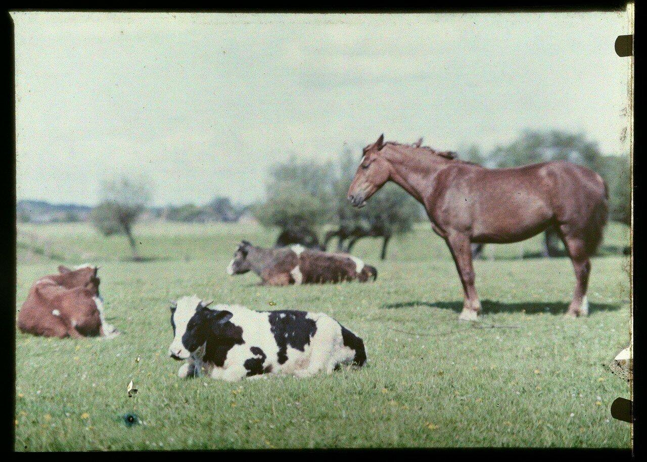 Фото жопы коровы 17 фотография
