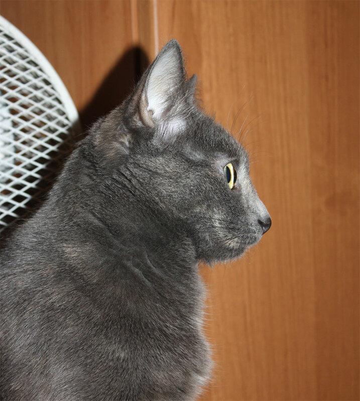 Тинки, 22 декабря 2011
