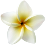 KMILL_flower.png