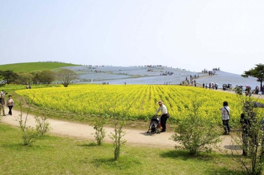 Живописный японский парк Хитати Кайхин 0 1422d3 56fc55b2 orig