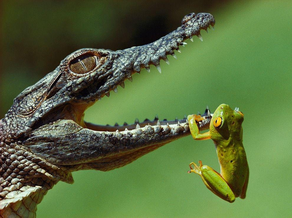 Лучшие обои 2011 г. от National Geographic