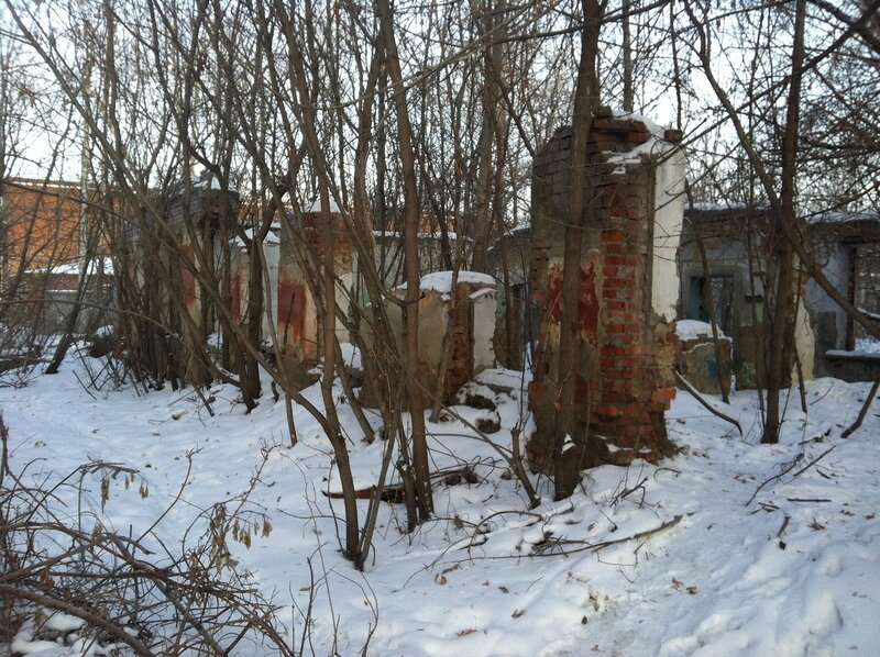 Руина в лесу