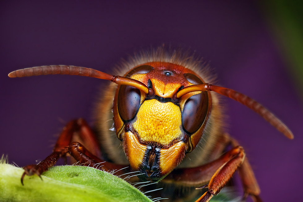 Fantastic Macro Photography of Insects