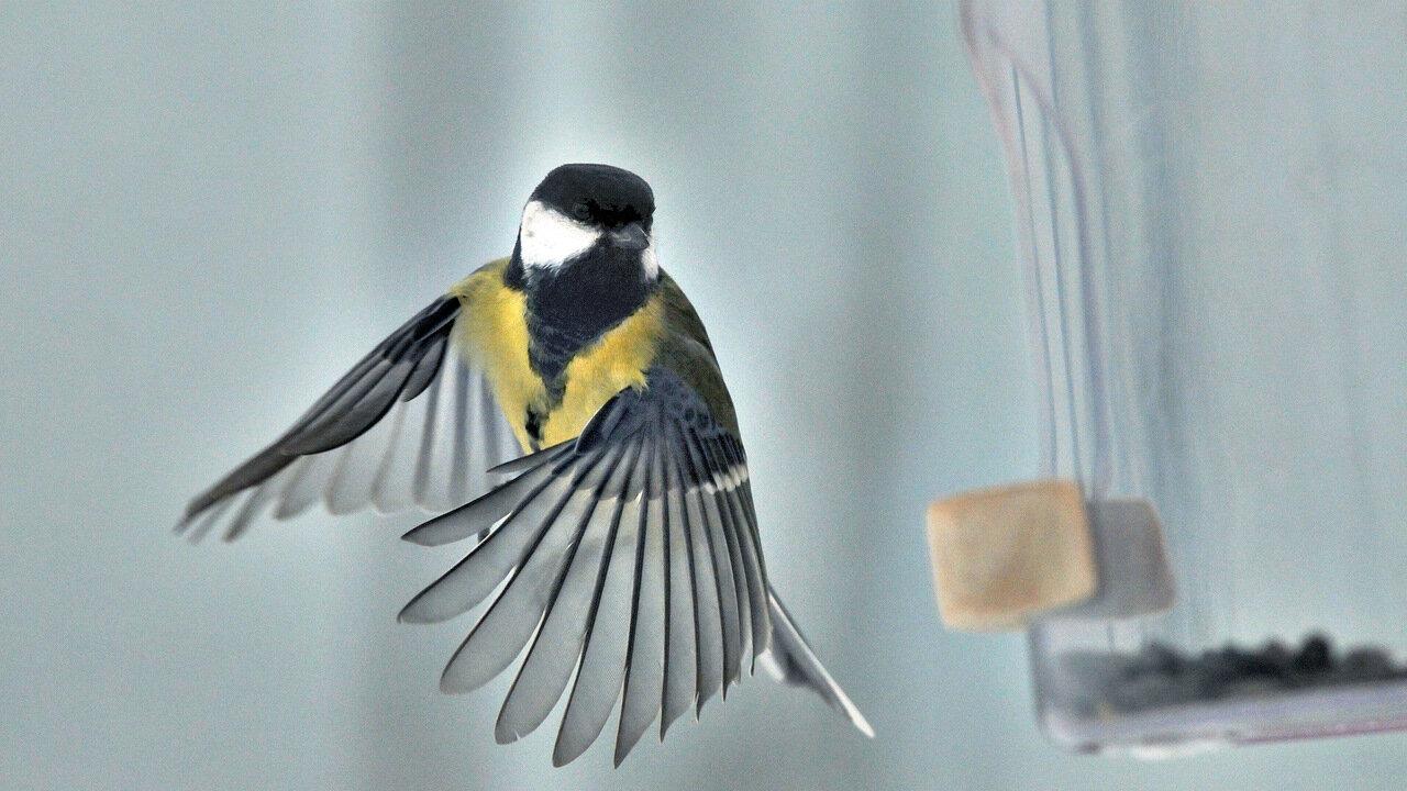 Фото 36. Съемка птиц на профессиональный кропнутый фотоаппарат Nikon D300s. 1/3200, 8.0, 300, ISO 3200.