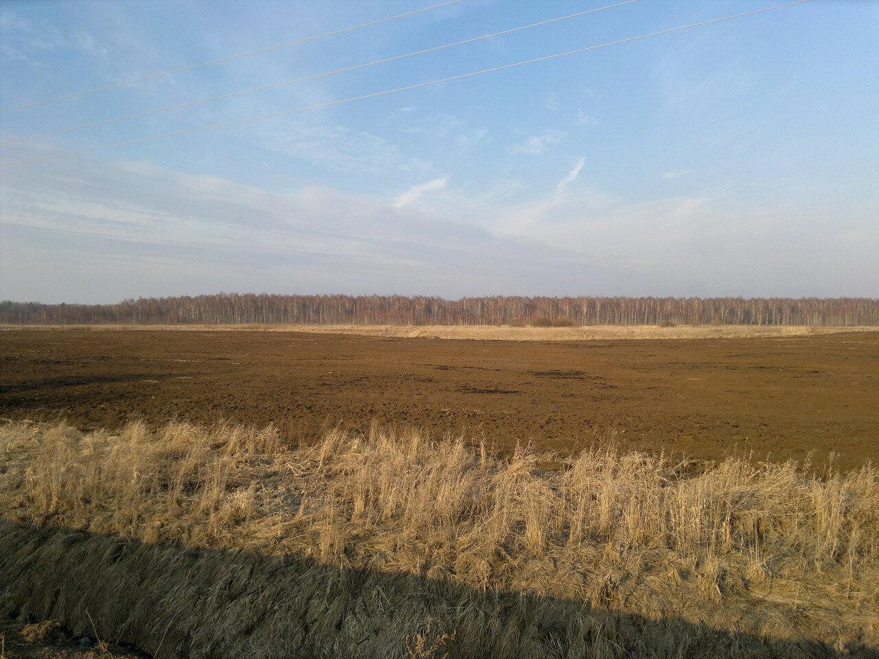 красный березовый лес