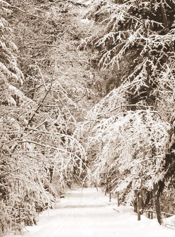 Вороново зимой