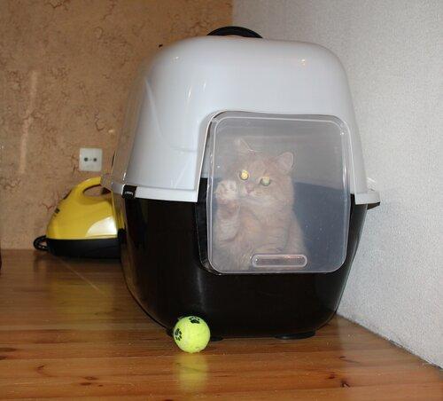 Туалет-домик для кошек своими руками фото 87