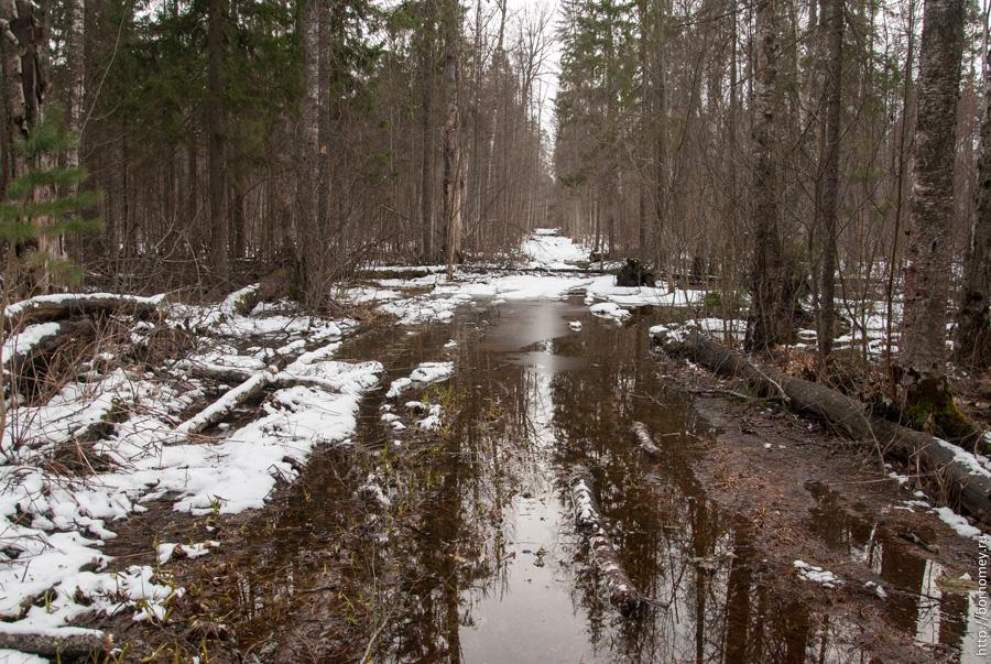 огромные лужи в лесу