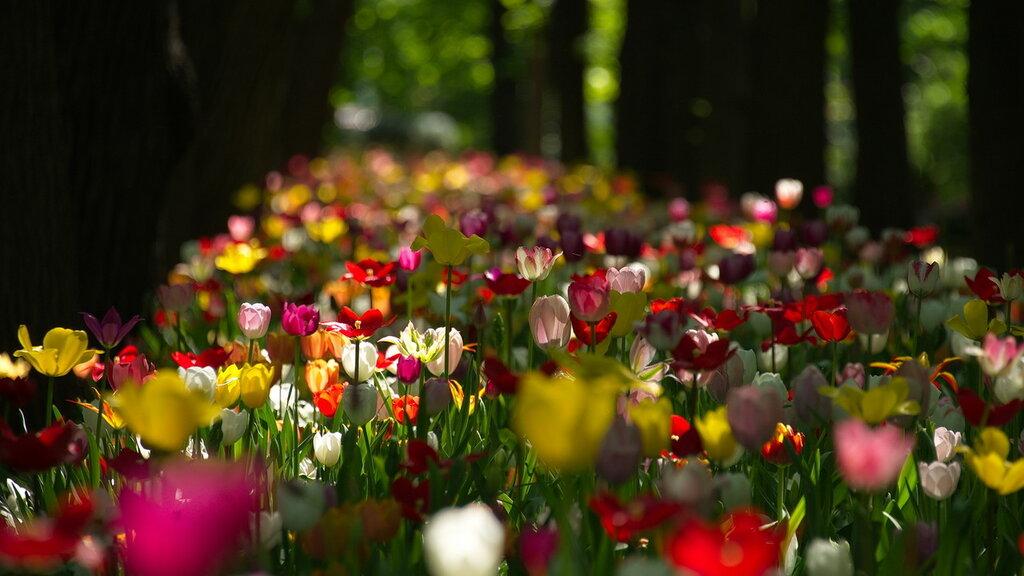 Весеннее многоцветье