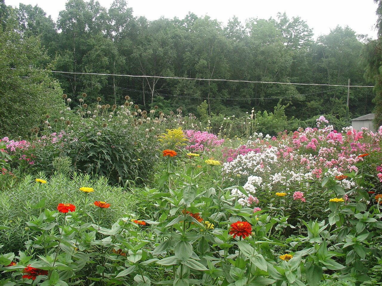 Владивосток, Ботанический сад.