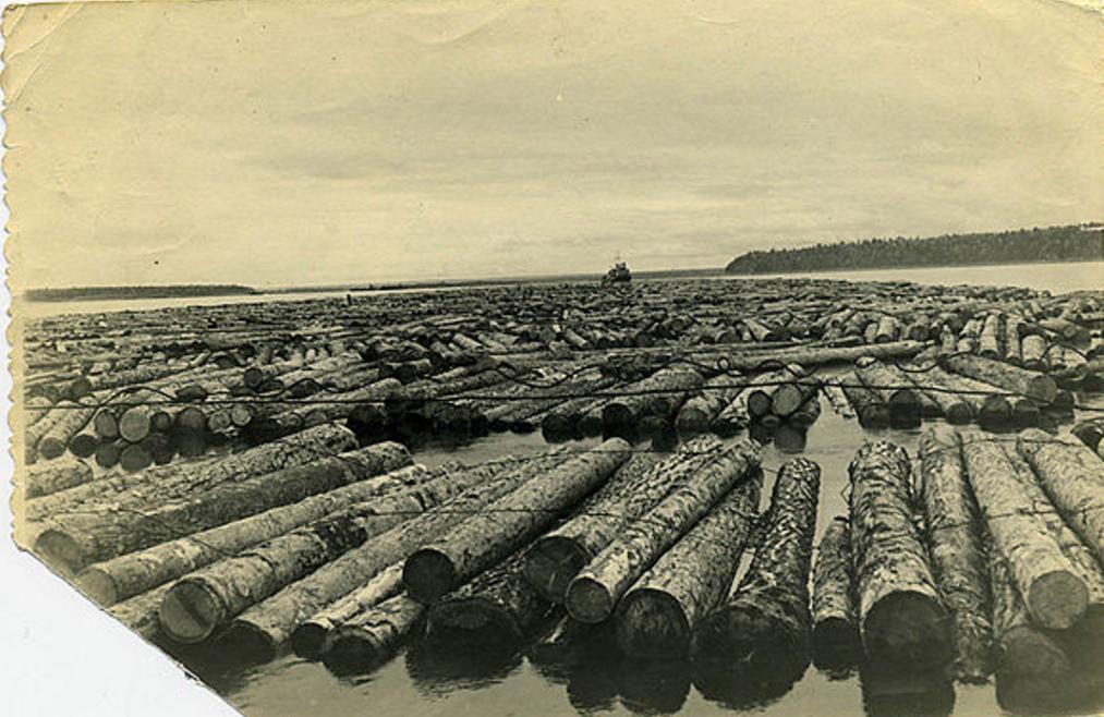 Сплав колхозного леса по Енисею