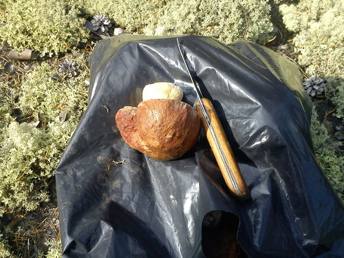 Белый гриб, нож, пакет