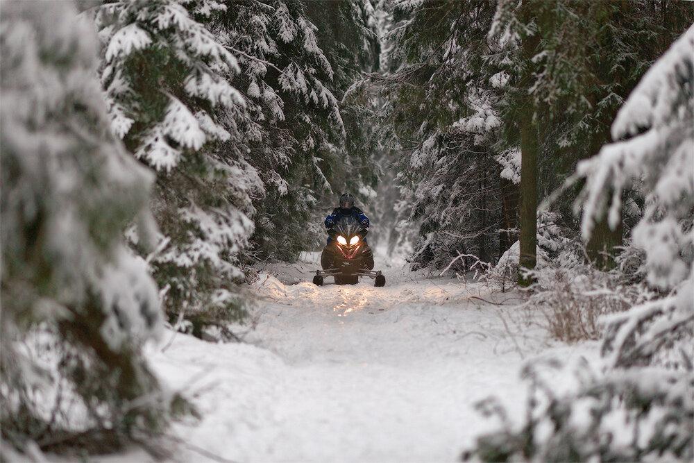 Дикий зверь из дикого леса
