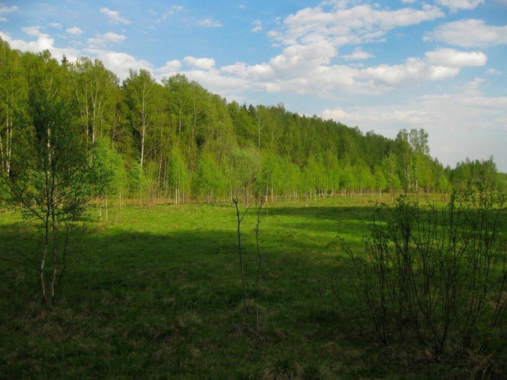 Поседкинское поле