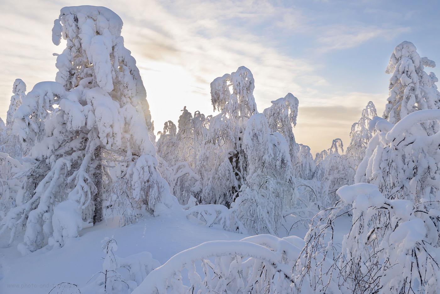 Фото 12. Тайга в окрестностях Каменного города зимой. Поездка на автомобиле по интересным местам Пермского края. 1/160, +2.0, 8.0, 200, 24.