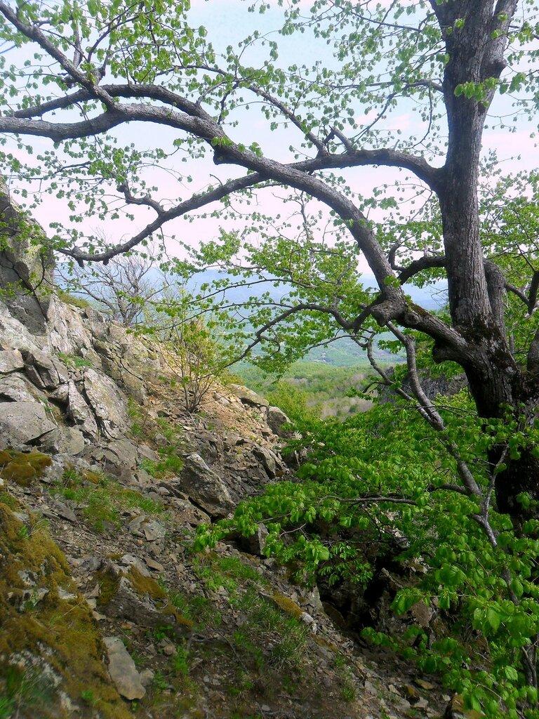Весной, у скал ... SAM_6735.JPG