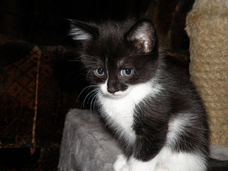Кошка осчастливила!!! 0_7933b_882ff851_XL
