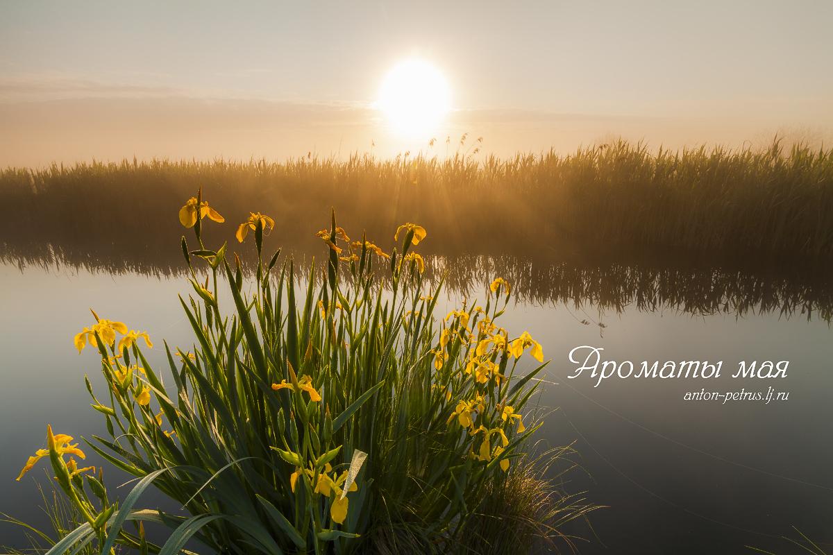 Благословенная Барышевка - родина великого пейзажиста!