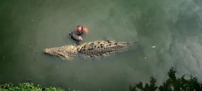 Человек и крокодил   удивительная дружба