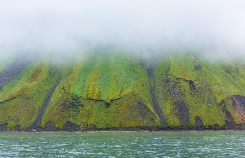 21. Третий млекопитающий на островах, кроме шпицбергенского северного оленя и песца — белый медведь.