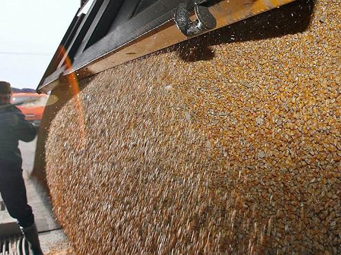 ВКрыму, Поволжье, Сибири инаУрале пройдут зерновые интервенции