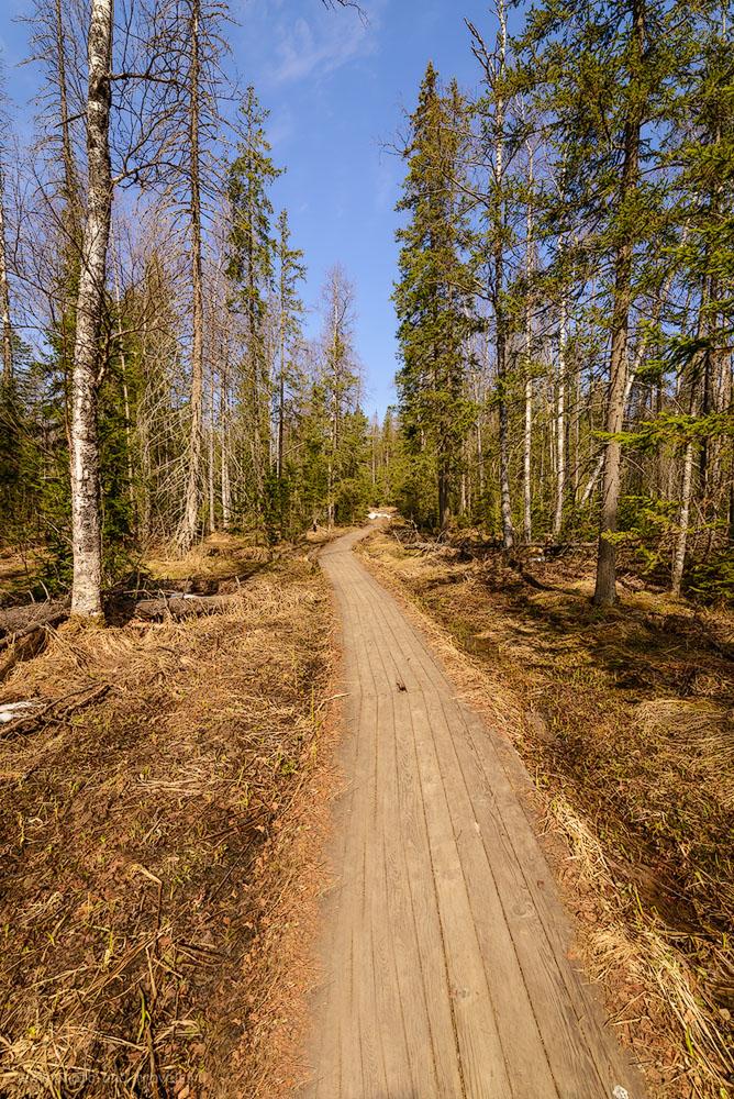 Фото 12. Чем выше поднимаешься на хребет Зюраткуль, тем реже и волшебнее становится окружающий лес. 1/500, -0.33, 9.0, 400, 14.