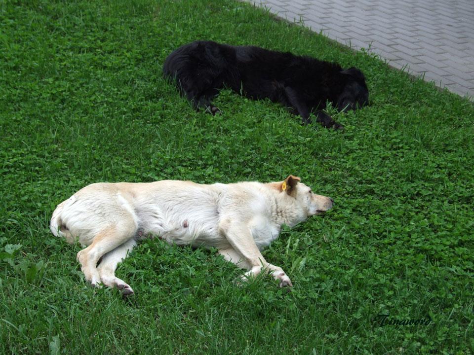 собаки-6.jpg
