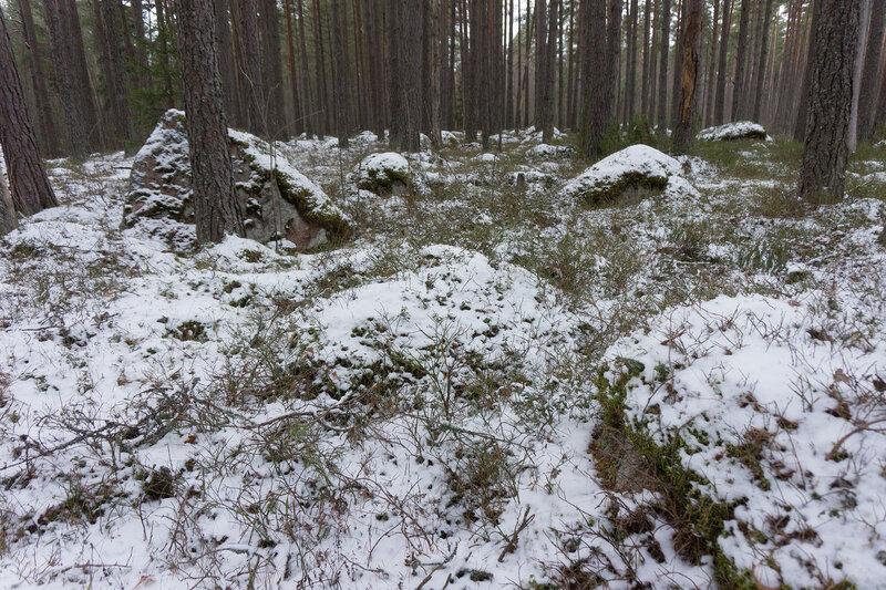 камни в сосновом лесу на полуострове киперорт