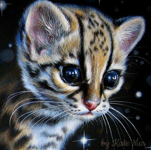 Посмотрите в глаза животным Kate Mur