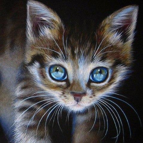 Посмотрите в глаза животным - Вы увидите в них себя! Kate Mur